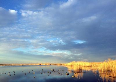 7 Prairie Marsh